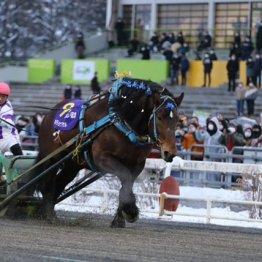 〈特別編〉ばんえい競馬の大スター ホクショウマサルの死に思うこと(2)