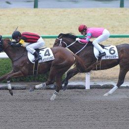 【播磨の土曜競馬コラム・戸畑特別】