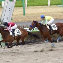 【飯島の日曜競馬コラム・福島8R】