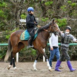 ナザレ「馬体重の数字以上に雄大でとても賢い」