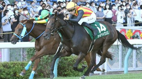 【アイビスサマーダッシュ】16頭中オープン馬はわずか6頭 ガラパゴス重賞を制したオールアットワンスの今後は!?