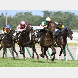 昨年の勝ち馬は川田のザダル