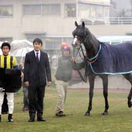 〈63〉柴田善臣騎手の活躍で思い出したサウスヴィグラス、そしてルーベンスメモリーのお話(2)