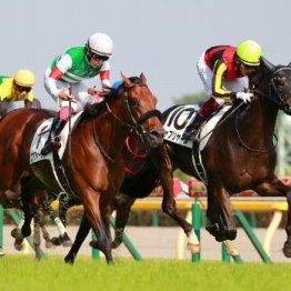 「今年の3歳牡、牝3冠勝利馬の写真がもらえる 」秋の新規入会キャンペーン実施中!