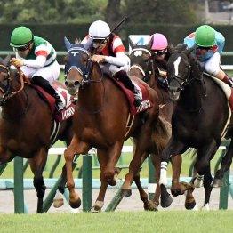 【オールカマー】レイパパレが負けても4歳牝馬のワン・ツー 横山武ウインマリリン意地のイン突き
