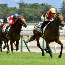 【大谷の土曜競馬コラム・サウジアラビアロイヤルC】